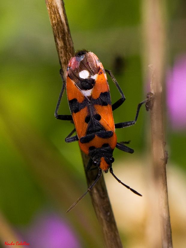 PN Tablas de Daimiel. Primer Testing de Biodiversidad. Abril 2011.