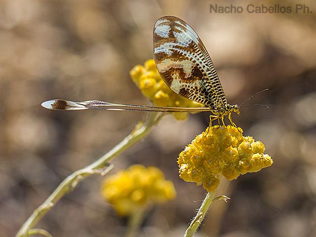 """Refugio de fauna """"Chico Mendes"""". Sierra Morena. Mayo 2015."""