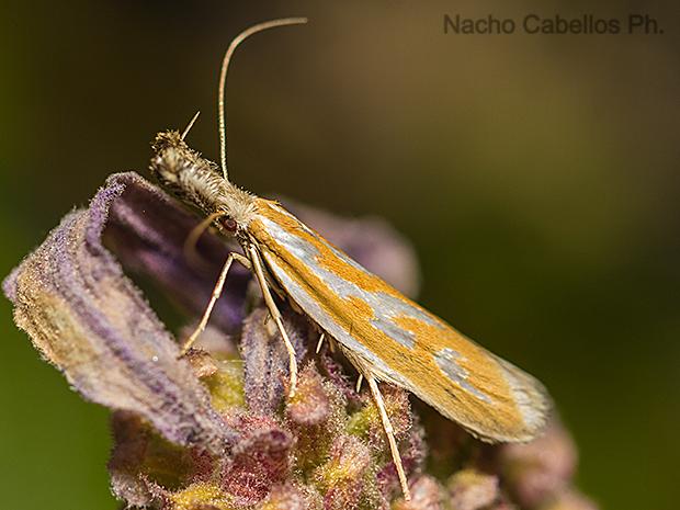 Refugio de Fauna Chico Mendes. Sierra Morena. Mayo 2015.